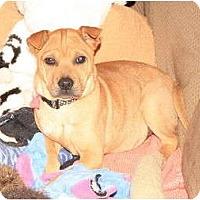 Adopt A Pet :: Ella - Nashville, TN