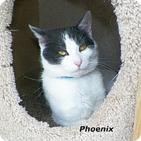 Adopt A Pet :: Phoenix - Dover, OH