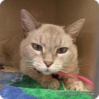 Adopt A Pet :: Beebe - Parlier, CA