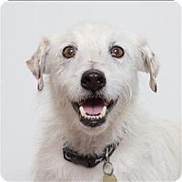 Adopt A Pet :: Clooney - San Luis Obispo, CA