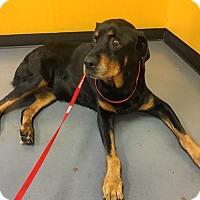 Adopt A Pet :: Taffy - Dallas, GA