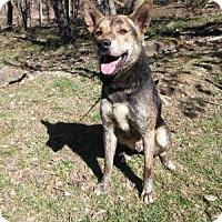 Adopt A Pet :: Spartan - Louisville, KY