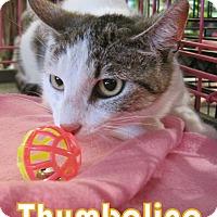 Adopt A Pet :: Thumbalina - Alhambra, CA