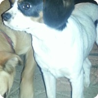 Adopt A Pet :: FRODO - Phoenix, AZ