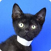 Adopt A Pet :: Gabe - Carencro, LA