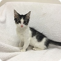 Adopt A Pet :: Grace - Mission Viejo, CA