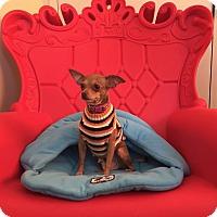 Adopt A Pet :: Sunny - San Francisco, CA