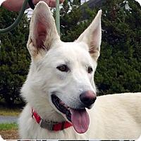 Adopt A Pet :: Maui - New Ringgold, PA
