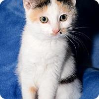 Adopt A Pet :: Janet - Salt Lake City, UT