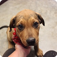 Adopt A Pet :: The Boss - Austin, AR