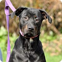 Adopt A Pet :: Xavier - Lisbon, OH