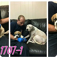 Adopt A Pet :: Jasmine and Jenny - Westmoreland, KS