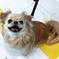 Adopt A Pet :: Ozzy - Buffalo, NY
