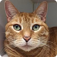 Adopt A Pet :: Princess - Norwalk, CT