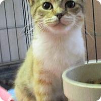 Adopt A Pet :: Merry - Reeds Spring, MO