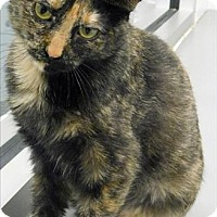 Adopt A Pet :: Neko - Topeka, KS