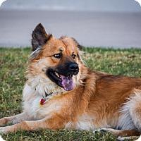 Adopt A Pet :: Mamacita - Gilbert, AZ