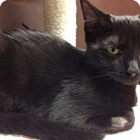 Adopt A Pet :: Jiji - New York, NY