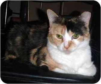 Calico Cat for adoption in Hamilton, Ontario - Roxy