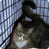 Adopt A Pet :: Sweetie - Cranford/Rartian, NJ