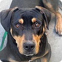 Adopt A Pet :: Jamie - Fillmore, CA
