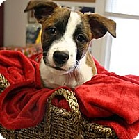 Adopt A Pet :: BO - Homewood, AL