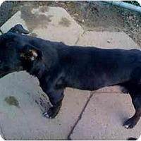 Adopt A Pet :: Maurice - Fowler, CA