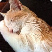 Adopt A Pet :: Bosley - Modesto, CA