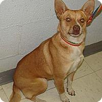 Adopt A Pet :: Socks - Providence, RI