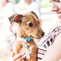 Adopt A Pet :: Lacy - Chicago, IL