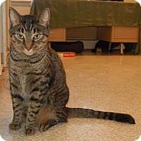 Adopt A Pet :: Jim - Fairfax, VA