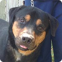 Adopt A Pet :: Bart - Alachua, GA