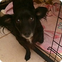 Adopt A Pet :: Beatrice - Edmond, OK