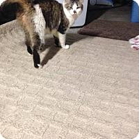 Adopt A Pet :: Pistashio - Putnam, CT
