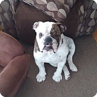 Adopt A Pet :: Colt - Columbus, OH