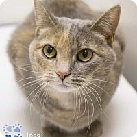 Adopt A Pet :: Jess - Merrifield, VA