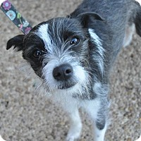 Adopt A Pet :: Cookie - Atlanta, GA