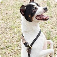Adopt A Pet :: Bijou - Chapel Hill, NC