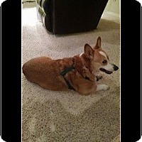 Adopt A Pet :: Bodie - Lomita, CA