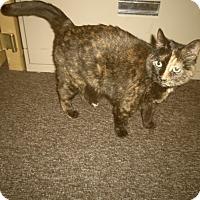 Adopt A Pet :: KEETIN - Medford, WI