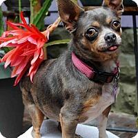 Adopt A Pet :: Chunky B - thibodaux, LA