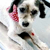 Adopt A Pet :: Molly-ADOPTION PENDING - Boulder, CO