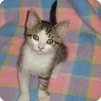 Adopt A Pet :: Sarina - Woodstock, ON