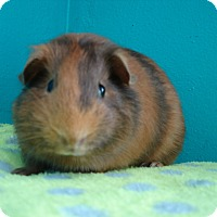 Adopt A Pet :: Dorothy - Coral Springs, FL