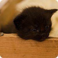 Adopt A Pet :: Mufasa $95 - Seneca, SC