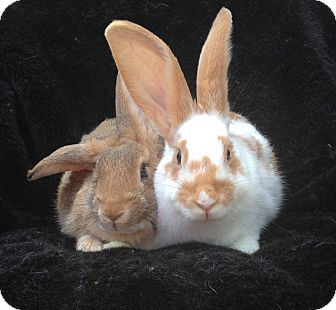 Other/Unknown Mix for adoption in Watauga, Texas - Gertrude & Ophelia