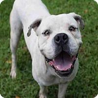 Adopt A Pet :: BANSHEE - Atlanta, GA
