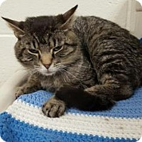 Adopt A Pet :: Tig - Chicago Heights, IL