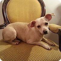 Adopt A Pet :: Puppy - Gaithersburg, MD