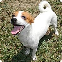 Adopt A Pet :: Hush Puppy - Umatilla, FL